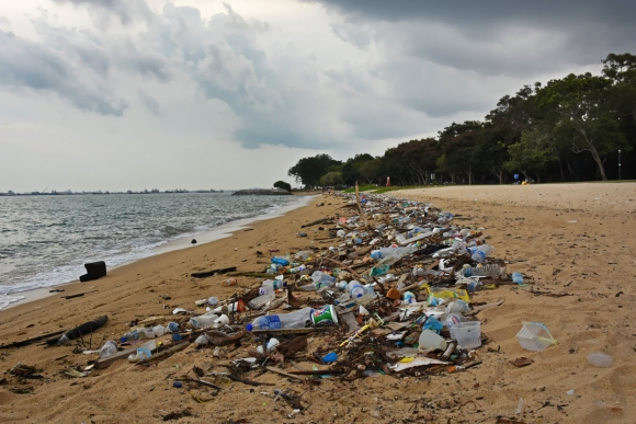 Litter on_Singapores_East_Coast_Park