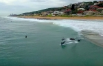 umdhloti-dolphins-video-1200-th